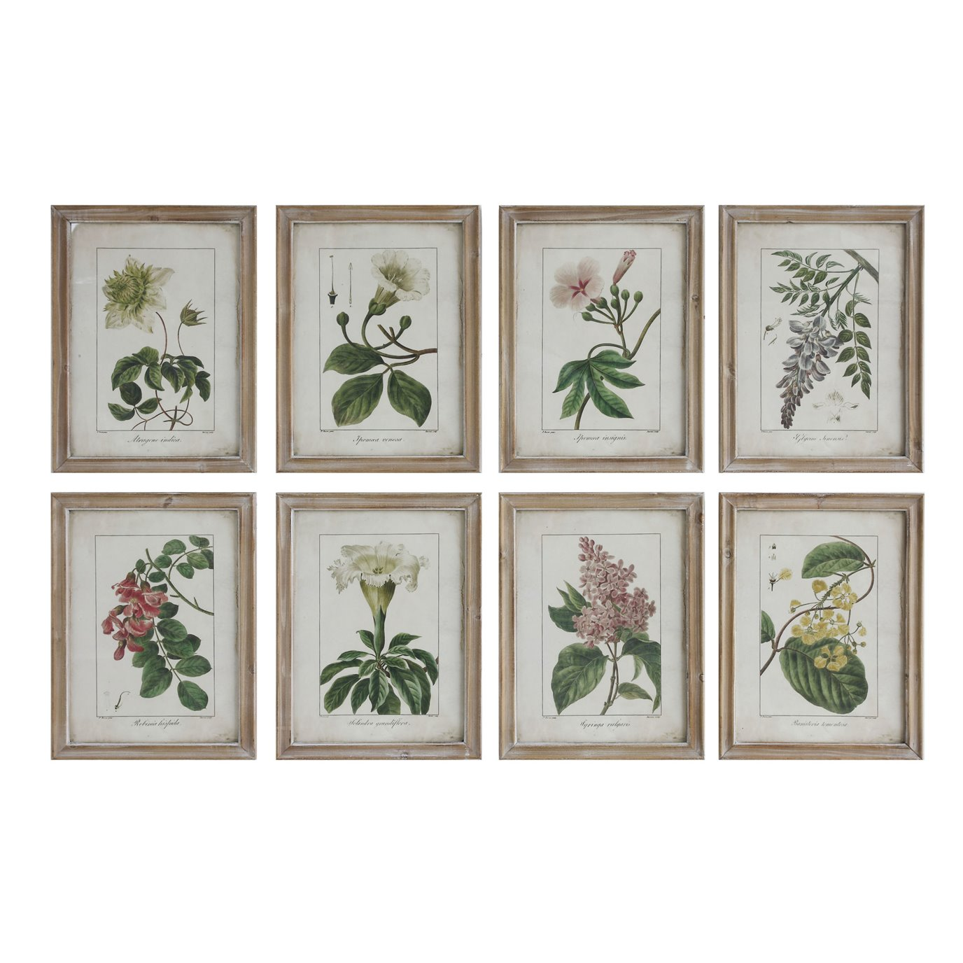 Wood Framed Wall Décor with Floral Image Reproductions (Set of 8 Designs)