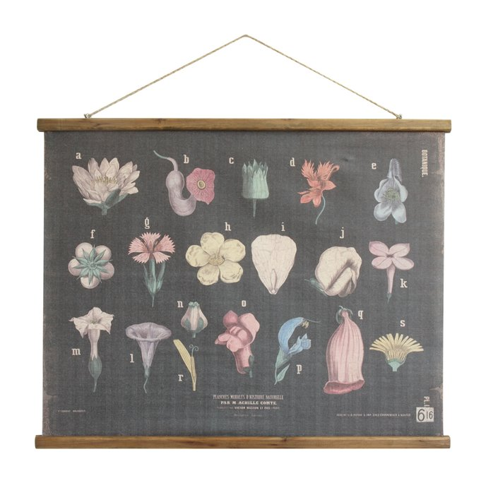 Scientific Botanicals Linen & Wood Scroll Wall Poster Thumbnail